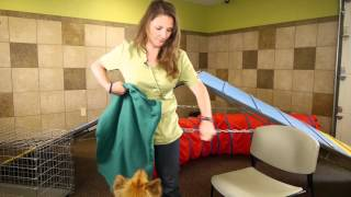 How To Keep A Dog's Claws From Tearing Furniture : Dog Training