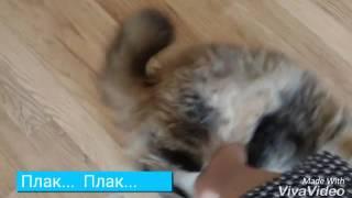 ВИДЕО УРОК по изгнанию кошки из комнаты. WTF?!? 👀👯