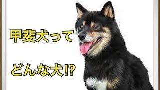 ットで犬を飼おうと迷っている方へ〜甲斐犬〜 世の中には様々な犬種があ...