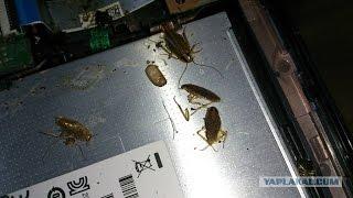Почему ноутбук не включается? Ремонт ноутбука после другого сервисного центра.(, 2016-05-07T20:08:00.000Z)
