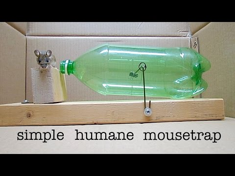 How to Make ● a Simple 2L BOTTLE HUMANE MOUSETRAP  that works!