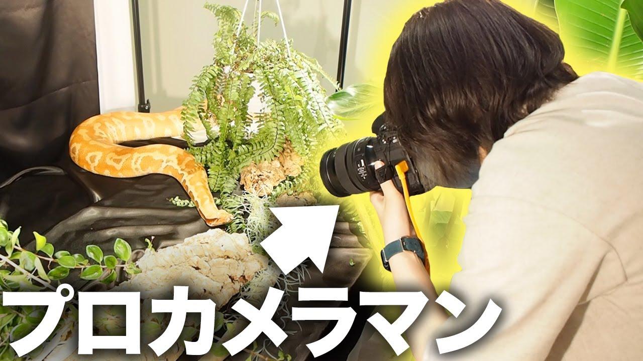 プロのペットカメラマンに我が家の蛇たちを撮影してもらったら感動した