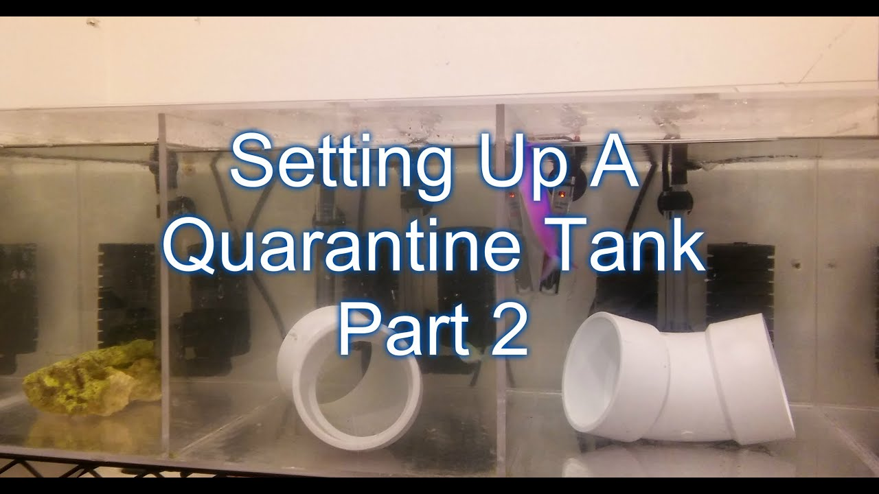 Setting Up A Quarantine Tank & Adding Fish