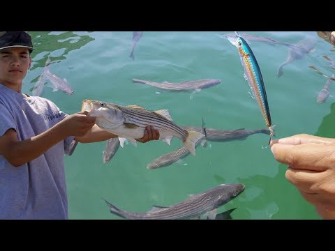 When Stripers Go Crazy! Striped Bass Boils Explained - Bait Tips