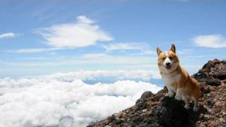 Top of Mt. Fuji / 富士山 山頂 20100717 Goro@Welsh corgi コーギー 世界遺産