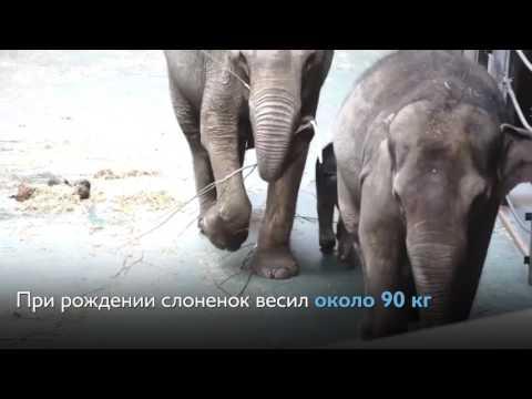 В Московском зоопарке...