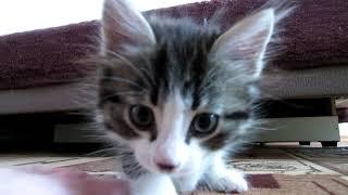 Веселый котенок любит играть. Funny kitten. The kitten loves to play