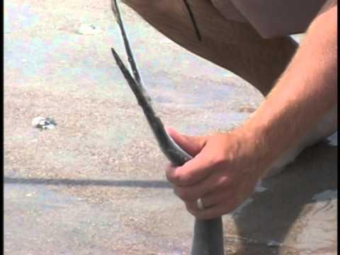 The Pendleton Sportsman - Offshore, Surf, and Sheepshead Fishing North Carolina - 2 of 2 - June 2004
