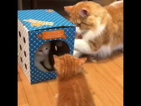 Gatinhos brincando na caixa