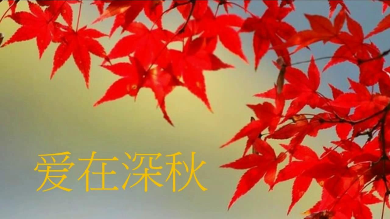 愛在深秋 - 音樂 - YouTube