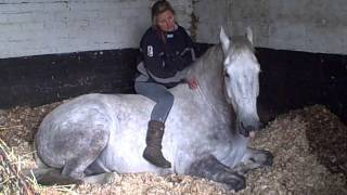 vuclip Horse  Big Boss Man  laying down .AVI