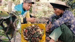 Ăn kiến Vàng Món Ăn Đặc Sản | Món Ăn Tây Nguyên 2