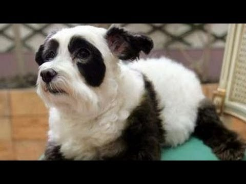 Pet Grooming For Aggressive Dogs Torrance