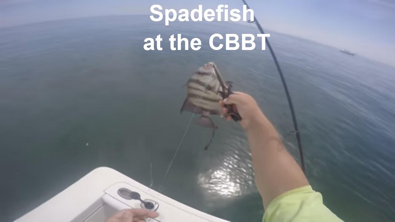 Spade fishing chesapeake bay bridge tunnel youtube for Chesapeake bay bridge fishing report