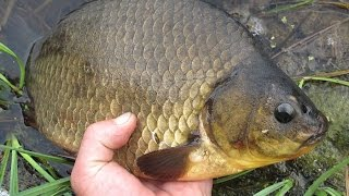 Ловля карася. Рыбалка на удочку Поездка на озеро Дарга!!! Река  Амур.