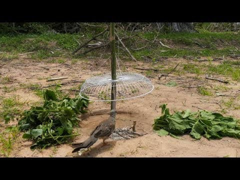 Unbelievably Helpful DIY Electric Fan Bird Trap  #LOWI