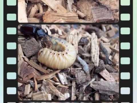 Fliegen larve the official website for fliegen larve for Fliegen larve