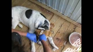 смоленский приют для животных #верность67