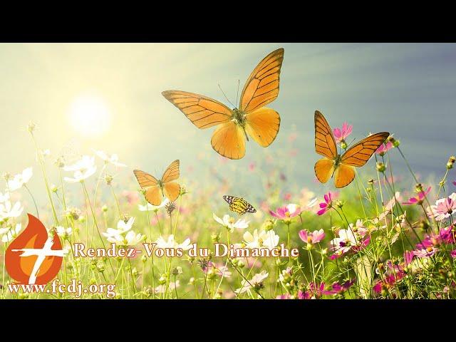 Joli petit papillon, tu apportes consolation et joie à Mon Cœur blessé (1 août 2021)