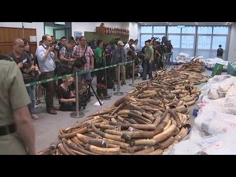 72,000 kilos of ivory seized in Hong Kong