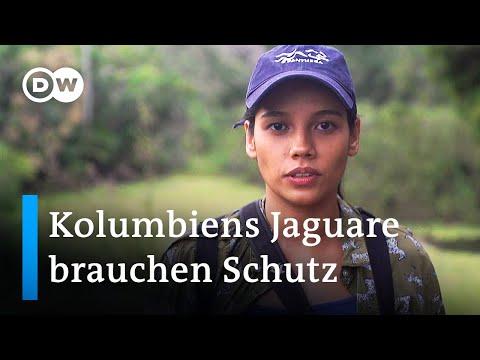 Kolumbien: Schutz für Jaguare | Global Ideas