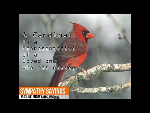 Cardinal A Representative Of Loved One Who Passed Youtube