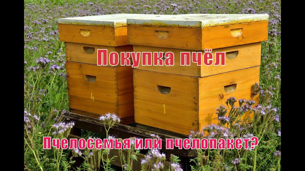 Пчеловодство для начинающих. Покупка пчёл с чего начать? Пчелосемья или пчелопакет?(4 часть))