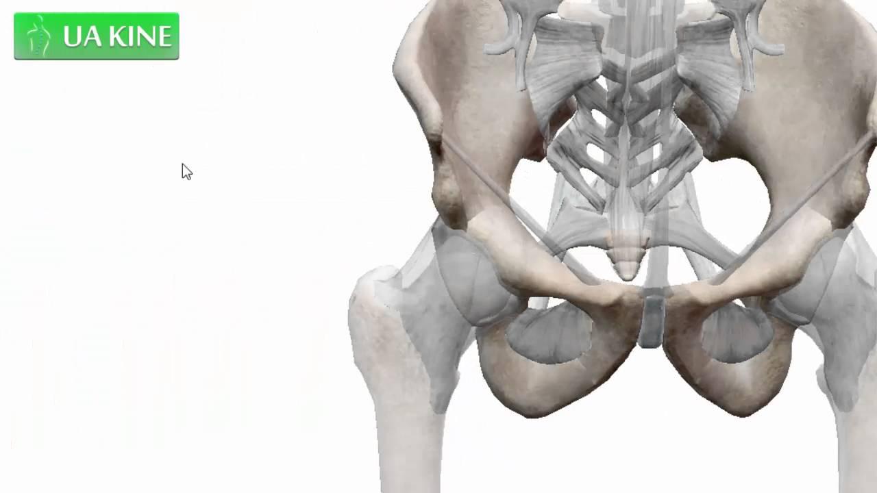 Anatomía de la Pelvis - YouTube