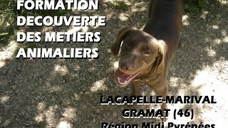 FORMATION DECOUVERTE DES METIERS ANIMALIERS