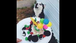 DIY: bday cake for my doggy! Thumbnail