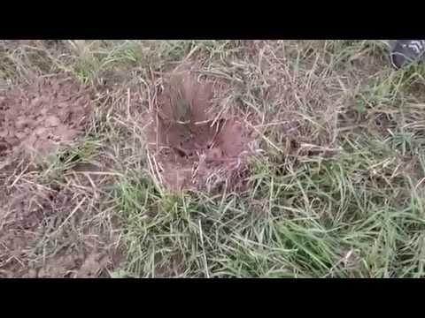 Поиск монет по Нижегородской области № 2