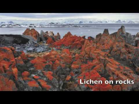 Polar Region Documentary