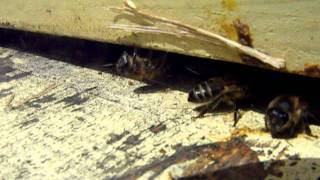 a little bee film for Anne and the boys