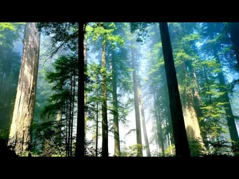 Vibrasphere - Forest Fuel