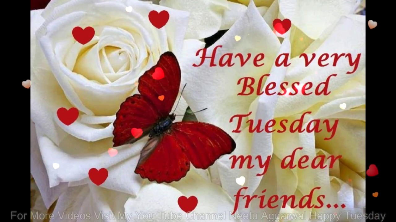 Happy Tuesday,Wishes,Greetings,Quotes,Sms,Saying,E Card,Wallpapers,Happy  Tuesday Whatsapp Video