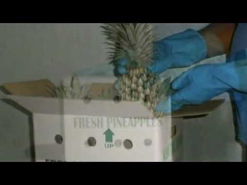 Fruit & Vegetable Packing Trust Exporters Sri Lanka