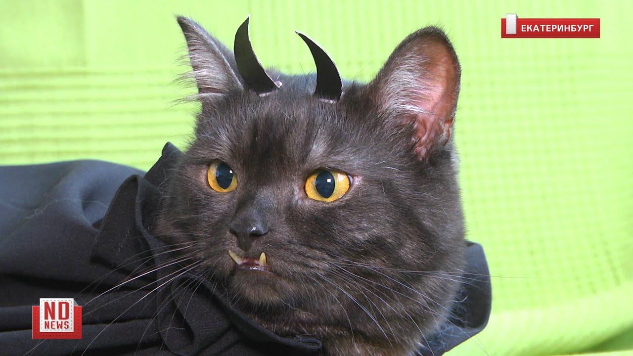 Как котик превращается в дьявола