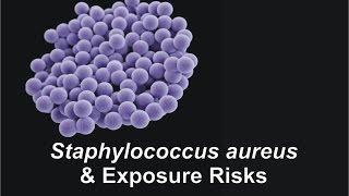Staphylococcus aureus & Exposure Risks