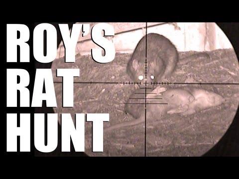 Fieldsports Britain - Roy's Rat Hunt