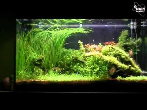 200l pflanzenaquarium youtube for Aquarium pflanzen