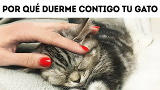 Esa es la razón por la que a tu gato le gusta dormir en tu cama
