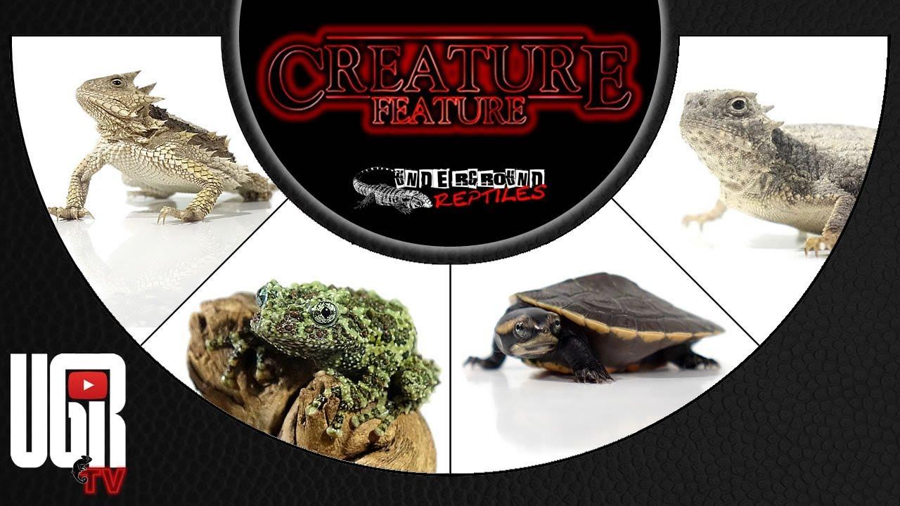 Underground Reptiles - Exotic Reptiles, Amphibians, Lizards and
