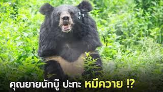 เพลง ยายเห็นหมี(ver ไก่ ภาษิต)