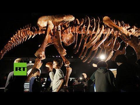 Hallan en Argentina el mayor dinosaurio de la historia