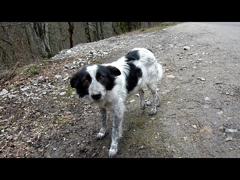 starving-dog-found-abandoned-in-the-woods-gets-rescued-by-howl-of-a-dog