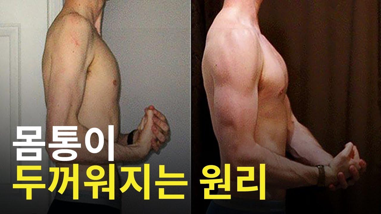 두꺼운 몸통은 어떻게 만들어지는가?