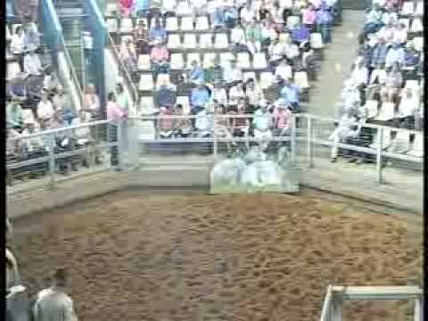ROCKHAMPTON BRAHMAN WEEK 2008 LIVE WEBCAST LOT703