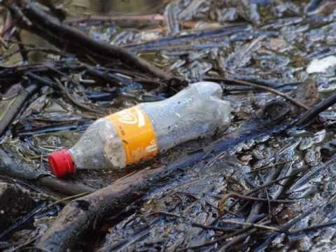 Coffs Harbour Waterways Pollution.