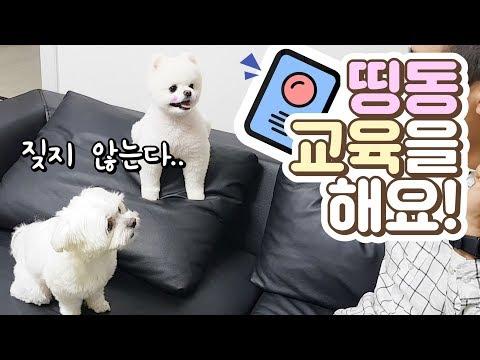 띵동띵동! 초인종소리에 짖지않는 강아지를 �