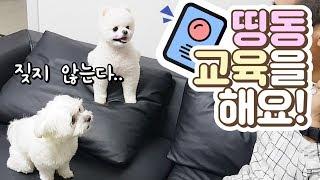 띵동띵동! 초인종소리에 짖지않는 강아지를 부탁해!(전용진쌤)